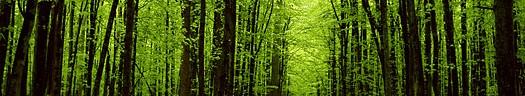 Domínio eco.br para sites verdes